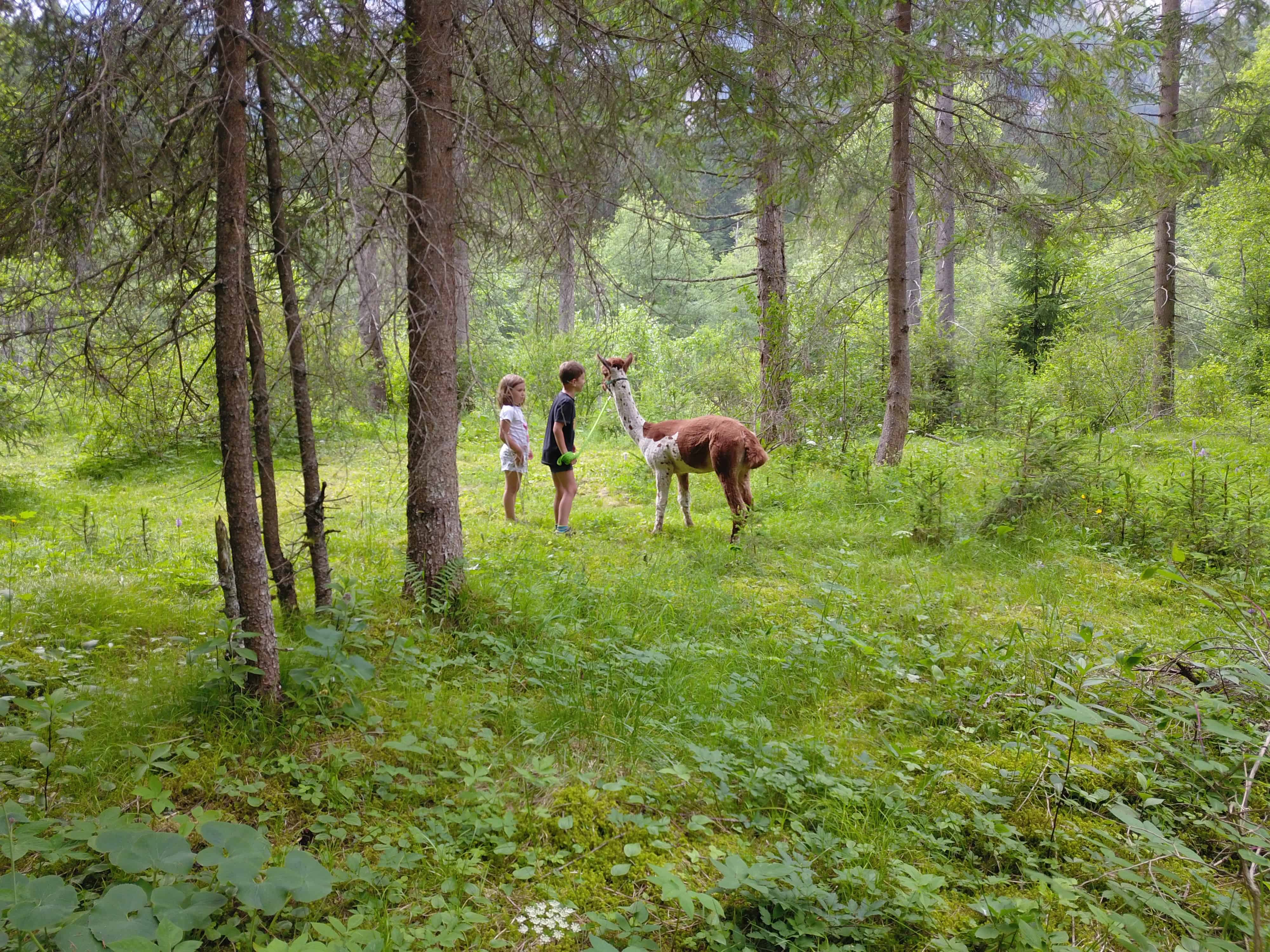 DJI_0220 Alpakas Fotos