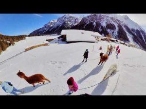 0-2 Alpaka Videos