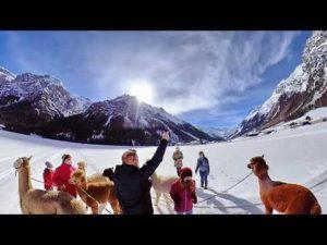 0-3 Alpaka Videos