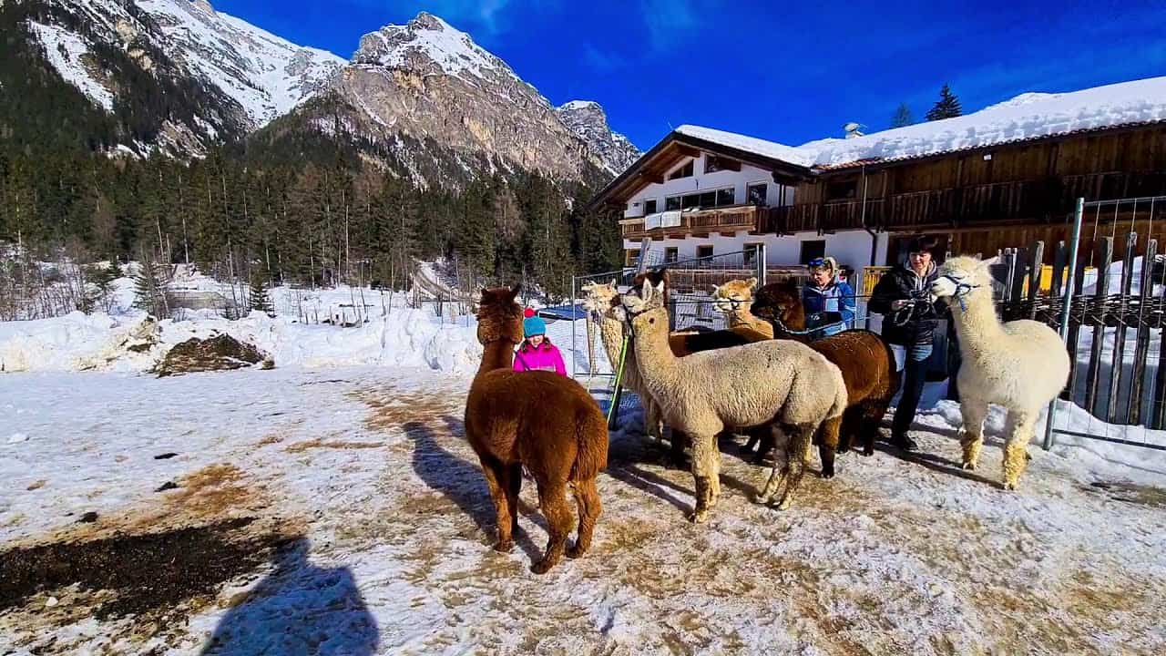 maxresdefault-1 Alpakas Fotos