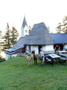 Gschnitzer-Alpaka-Sankt-Magdalena Wanderungen