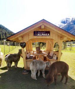 Gschnitzer_Alpaka-Alpakas-Wanderungen-Tirol-04-scaled Wanderungen