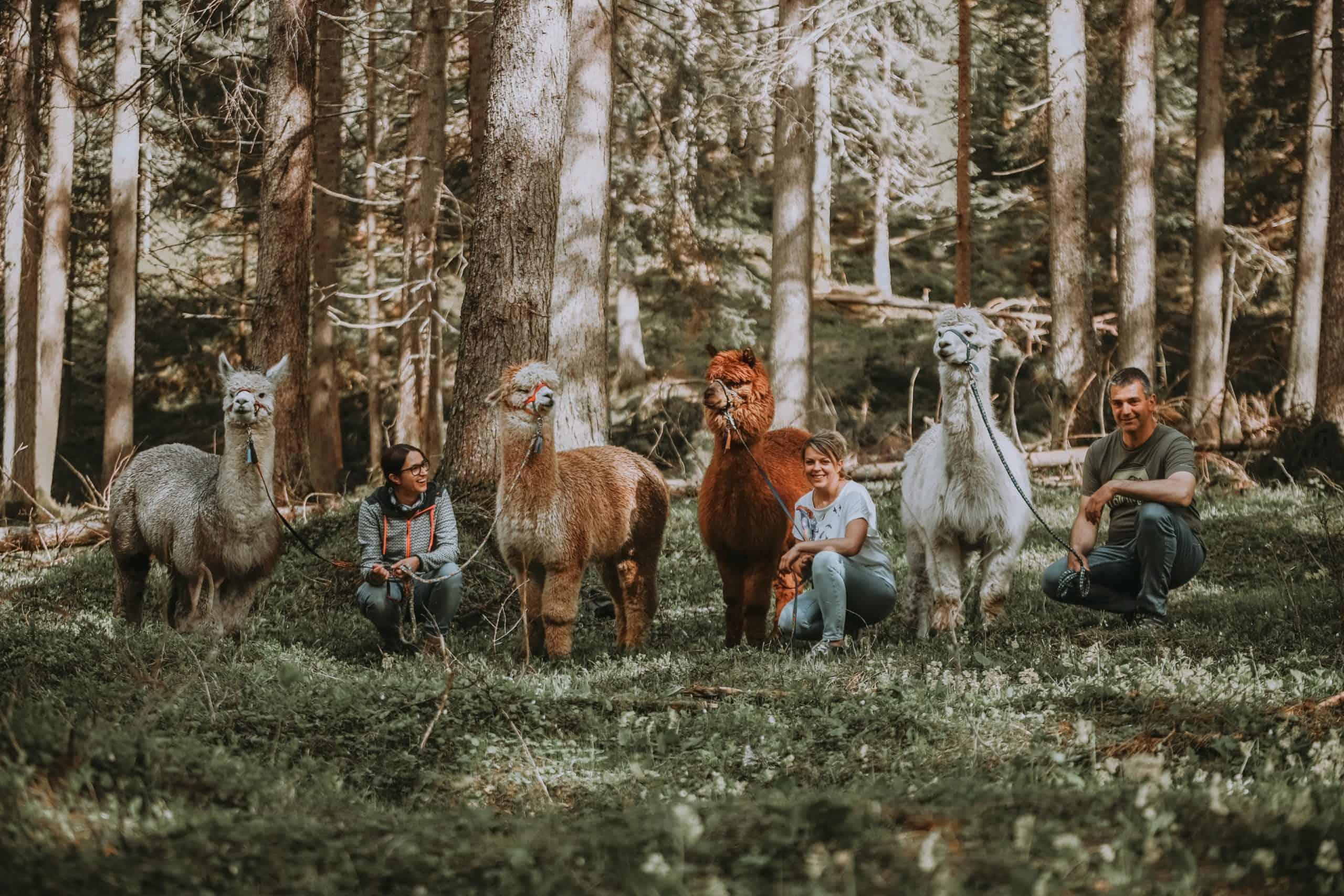 Gschnitzer_Alpaka-Alpakas-Wanderungen-Tirol-05-scaled Wanderungen