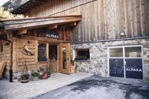 Gschnitzer_Alpaka-Alpakas-Wanderungen-Tirol-10-scaled Alpakas Fotos
